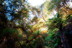 Forested Landscape near Rotorua, New Zealand Stock Photography
