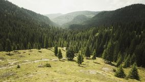 Forested mountain with pine trees. Forested mountain landscape with green pine trees in the summer Stock Photography