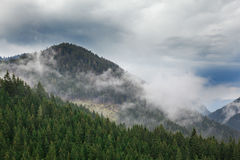Forested mountain slope in clouds with evergreen conifers shrouded in mist. Scenic landscape view. Slovakia, Nizke Tatry Royalty Free Stock Images