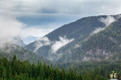 Forested mountain slope in clouds with evergreen conifers shrouded in mist. Scenic landscape view. Slovakia, Nizke Tatry Royalty Free Stock Photo