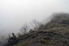 Forested mountain slope in low lying cloud with the evergreen conifers shrouded in mist in a scenic landscape view Stock Image