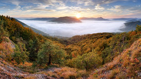 Forested mountain slope in mist in a scenic landscape. Stock Images