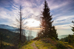 Forested mountains Stock Photography