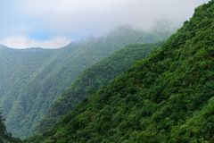 Forested mountains in a fog. Madeira, Portugal. Forested mountains in a fog. View from Balcoes viewpoint in Ribeiro Frio on Portuguese Island of Madeira stock images