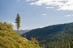 Forested mountains landscape Stock Photos