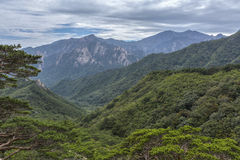 Forested mountains Stock Images