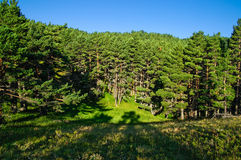 Forested mountainside. Scenic view of green forest on mountainside with blue sky background stock image