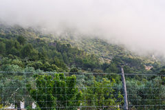 Forested mountainside in fog Royalty Free Stock Photo