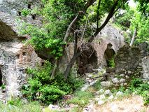 Forested over the walls of the ancient city of Olympos. Turkey Royalty Free Stock Photos