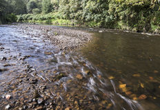 Forested riverbank and flowing water at Moses Gate Country Park. Forested riverbank and flowing water over stones at Moses Gate Country Park, near Bolton Royalty Free Stock Image