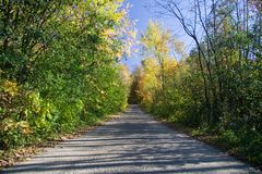 Forested Road Royalty Free Stock Photos