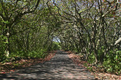 Forested Road. Road shaded b y beautiful trees on a sunny day Stock Photos