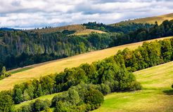 Forested rolling hill on a cloudy day. Lovely nature scenery of mountainous countrye. gorgeous weather early in the autumn Royalty Free Stock Photography