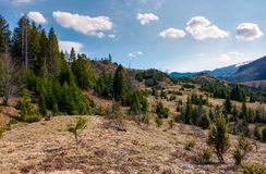 Forested rolling hills in springtime. Lovely nature scenery Royalty Free Stock Image
