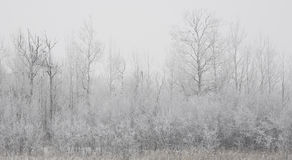 Forested Shoreline in Winter Fog Stock Photos