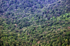 Forested slope of the mountain Stock Image