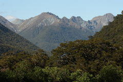 Forested slopes in Fiordland National Park Stock Image