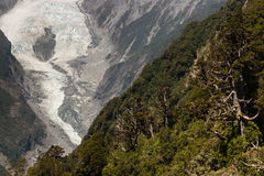 Forested slopes near Franz Josef Glacier. In New Zealand Stock Photo