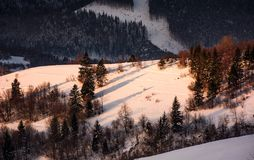Forested snowy hillside in morning light. Lovely winter nature background Stock Image