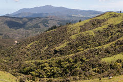 Forested valley in Coromandel Ranges Royalty Free Stock Images