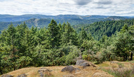 Forested valley near Victoria, BC, Canada Royalty Free Stock Image