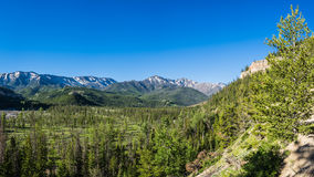 Forested Valley of Pine Trees Royalty Free Stock Photos