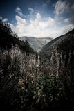 Forested valleys between the mountains. andorra Stock Image