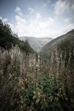 Forested valleys between the mountains. andorra Royalty Free Stock Images