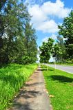 Forested walkway by main road Royalty Free Stock Images