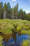 Forested Wetland Stock Photography