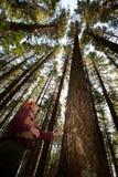 forester северо-запад pacific стоковое фото rf