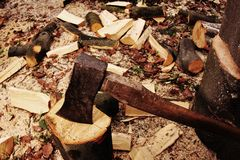 Forester chopping wood with an axe Royalty Free Stock Image