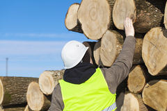 Forester near logs Stock Photo