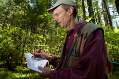 Forester in a Pacific Northwest. Forester reading a map in a forest among Douglas fir trees Royalty Free Stock Photos