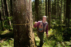 Forester in a Pacific Northwest. Forester using a tape measure to guage the girth of a Douglas fir Royalty Free Stock Photo