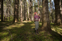 Forester in a Pacific Northwest. Forester using a laser tool to guage the height of a Douglas fir Stock Photography