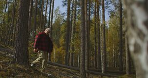 Forester is walking in woodland at autumn, checking forest district, middle-aged man with backpack is hiking alone