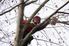 Forester at work Royalty Free Stock Photo