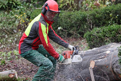 Forester at work Stock Image