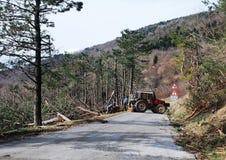 Foresters освобождая деревья поврежденные гололедью Стоковые Изображения RF
