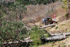 Foresters освобождая деревья поврежденные гололедью Стоковое фото RF