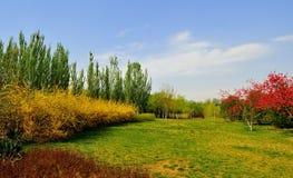 Forestet Park Royaltyfria Bilder