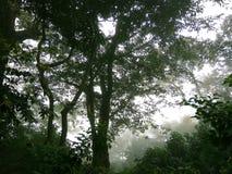 ForestFog и деревья Заводы и деревья природы Стоковые Изображения RF
