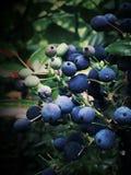 Forestfruits в темном лесе Стоковая Фотография