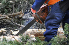 Forestier Image libre de droits