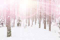Forestland Stock Images
