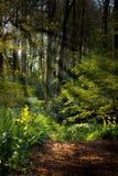 Forestpath im Frühjahr mit Blumen und Sunrays Lizenzfreie Stockbilder