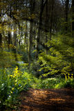 Forestpath in spring with flowers and sunrays Royalty Free Stock Images