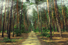 ForestPicturesque de Oekraïne Royalty-vrije Stock Afbeeldingen