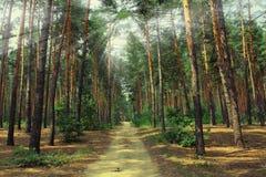 ForestPicturesque Ucrania Imágenes de archivo libres de regalías